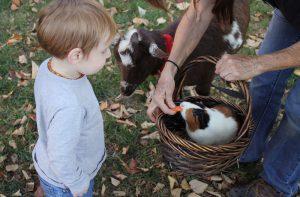 zdjęcie ciekawego chłopca patrzącego na dokarmianie królików